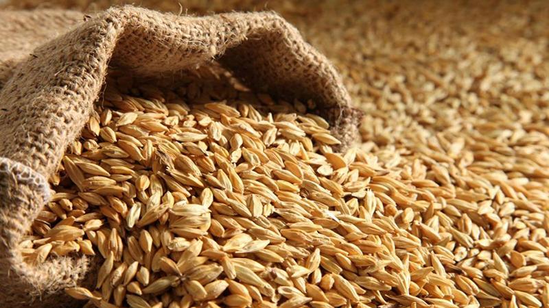 Грузия частично заменит российскую пшеницу казахстанской