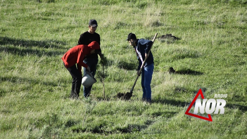 На территории Халача посадили еще 200 саженцев/фото