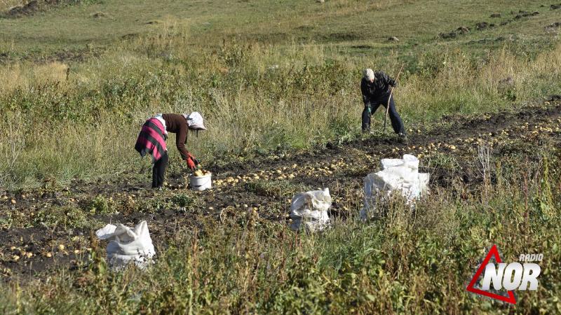 Министерство сельского хозяйства обещало помочь в вопросе реализации картофеля
