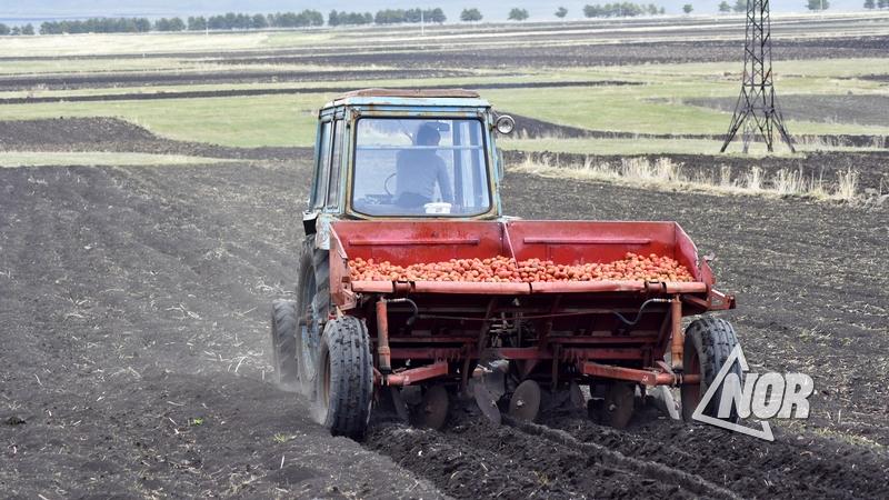 По заявлению посла, граждане Грузии смогут сезонно работать в сельском хозяйстве Германии в течение максимум 90 дней