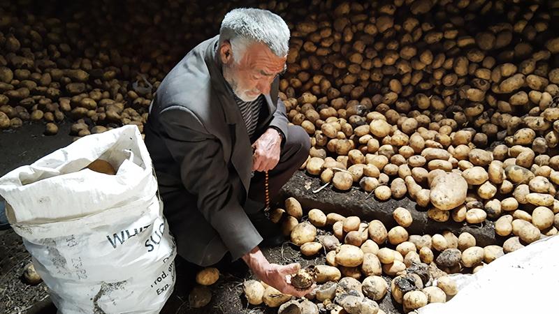 Фермер из Ахалкалаки: Наш урожай портится, а армии поставляют импортный картофель
