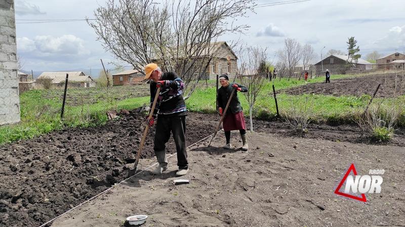 В муниципалитете Ниноцминда началась посадка картофеля