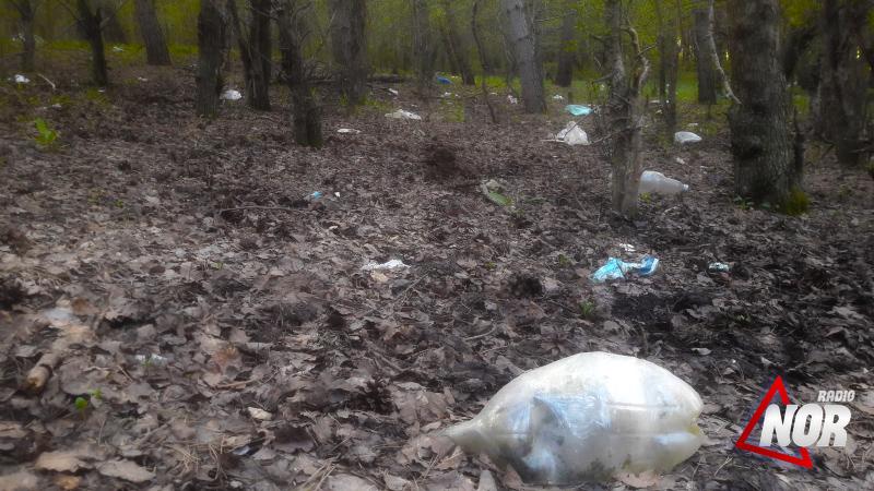 Замусоренный лес на дороге Ниноцминда-Ахалкалаки