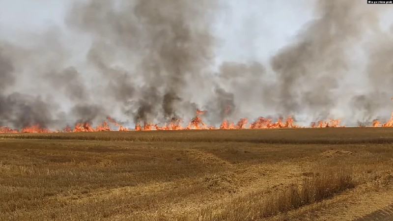 В Кахетии горит неубранный урожай пшеницы и ячменя/видео