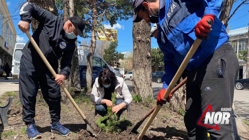 В Ниноцминде проводится посадка деревьев/фото